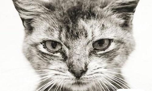 Pour l'identification et la stérilisation des chats errants sur Lezennes