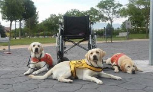 Pétition : Quels sont vos programmes pour les animaux et les handicapés !