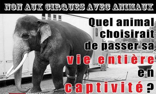 Pour l'interdiction des cirques avec animaux à Rennes et sa métropole.