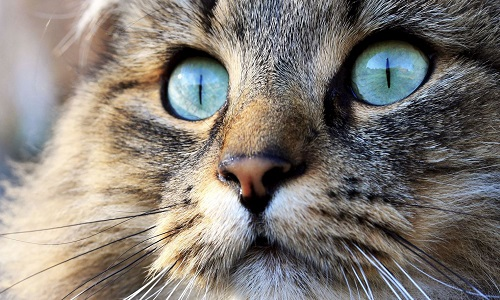 Pétition : Maltraitance animale à Montauban: Des chats meurent de faim oubliés dans des cages de trappage