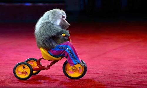 Pour l'arrêt des cirques animaux !