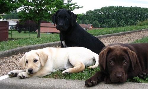 Pour l'ouverture d'un centre chiens guides d'aveugles