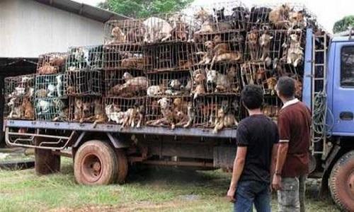 Pour que les animaux soient libres !