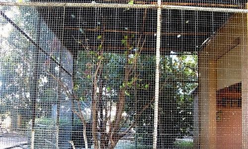 Faisons libérer les perruches ondulées du Parc-Olbius-Riquier de Hyères