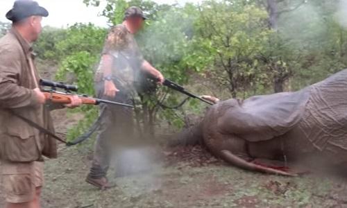 Mettre en prison Pascal Omelta, Christophe Morio et Luc Alphand pour avoir tué un éléphant sans défense!