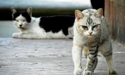 Invasion de chats et maltraitance d'animaux !