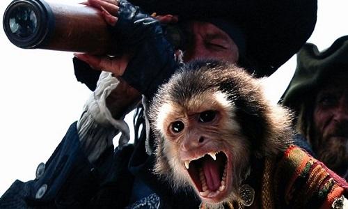 La maltraitance animale au cinéma