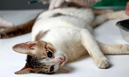 Accordez un crédit d'impôt pour la stérilisation des animaux de compagnie !