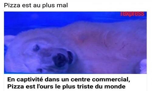 L'ours le plus triste du monde
