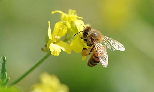 Sauvons les abeilles bienfaisantes sans les tuer !
