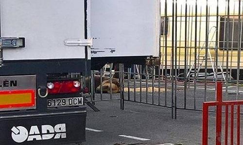 Dunkerque : stop aux cirques avec animaux !