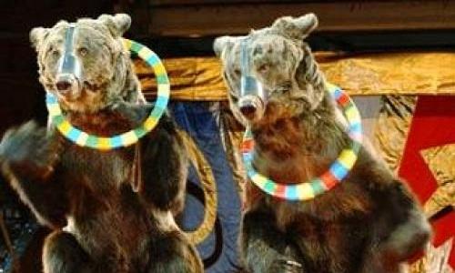 Non aux cirques avec animaux dans la ville du Havre