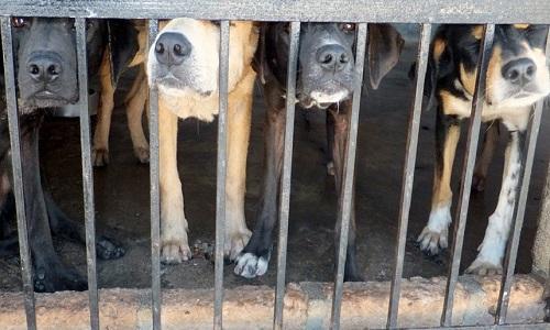Pétition : Trafic de chiens en France et pays de l'Est