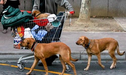 Pétition : Droit à des structures pour les sdf avec la possibilité de garder leurs animaux auprès d'eux
