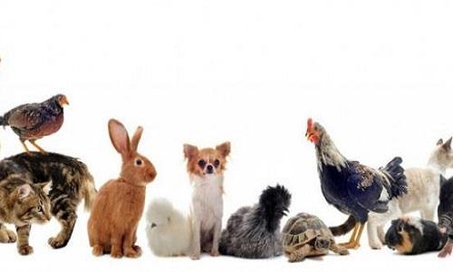 Pétition : Pour que les soins d'animaux chez le vétérinaire soient déductibles des impôts à x%