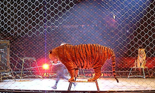 Non aux cirques exploitant des animaux sur la commune de Beuvry