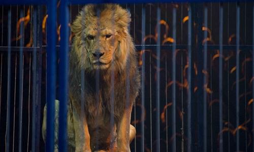 Non aux cirques avec animaux à Vichy