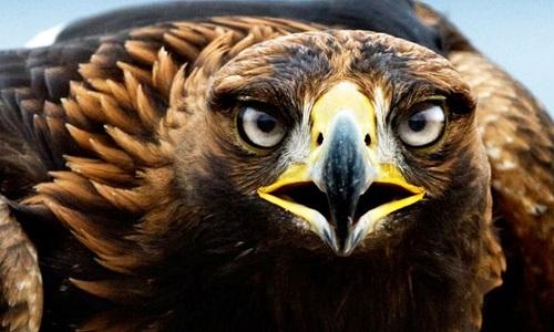 Stop à l'utilisation des aigles dans l'armée française