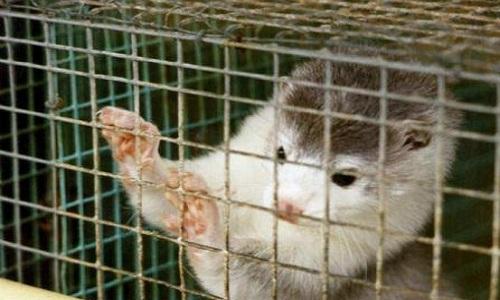 Les animaux dans des cages