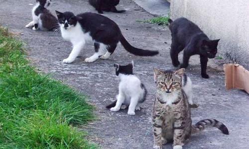 Pétition : Contre les captures de chats errants au pays de Lorient