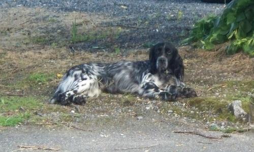 Pétition : Sortir Loulou, le chien, des griffes de la SPA !