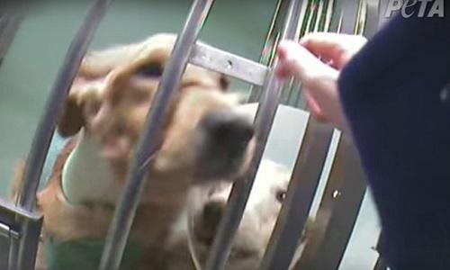 Pétition : Contre les tests sur les chiens !