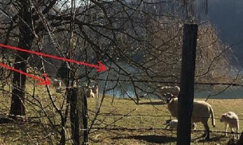 Pétition : Halte à la mise en danger des moutons et agneaux au lieu-dit « le melay » à saint-romain-en-gal (69) - stop à cette unique décharge à poubelles du Rhône !