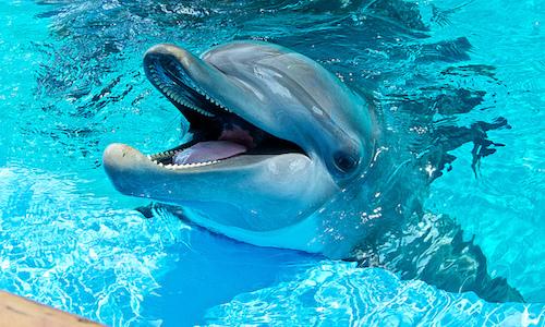 Un groupe Facebook se permet de tenir des dauphins en captivité