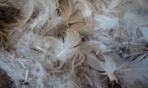 Interdiction de tous les matériaux d'origine animale dans nos accessoires cosmétiques !
