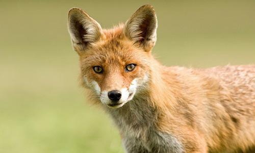 Faire cesser l'abattage des animaux classés nuisibles