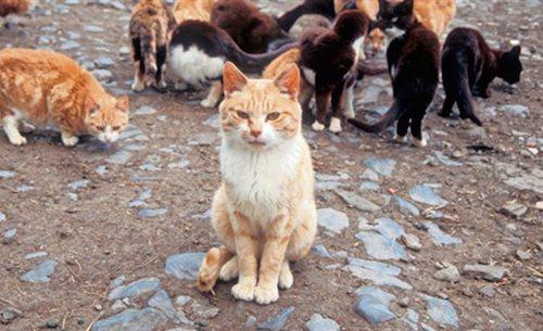 Pétition : SOS : pas de fourrière pour les chats de Montrond-les-Bains