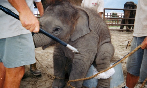 Non aux cirques avec animaux à Albi