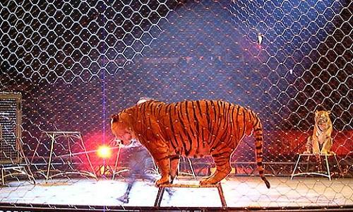 Non aux cirques avec animaux à Montpellier