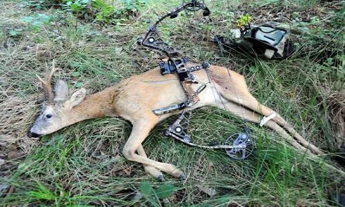 Halte à la chasse au gibier