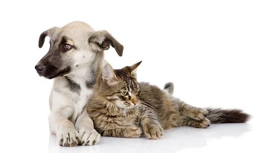 Informations obligatoires sur la stérilisation des chiens et des chats !