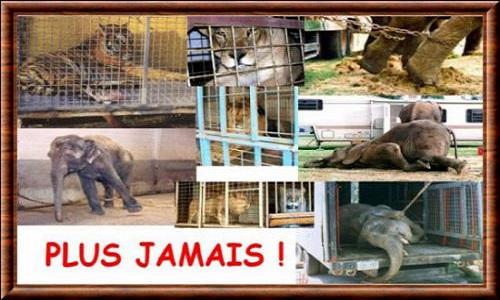 NON aux cirques avec des animaux à Ormesson sur Marne