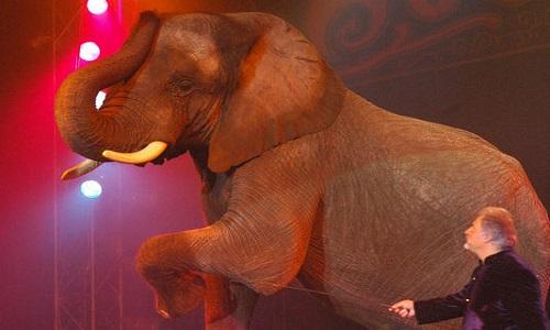Pas de cirques avec animaux
