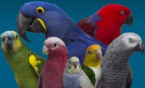 Non à la taille des plumes de tous les oiseaux
