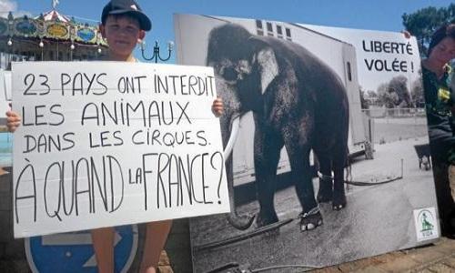 Interdiction des cirques avec animaux en France