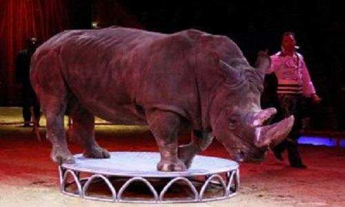 Pétition : Pour que tous les animaux de cirques vivent libres !