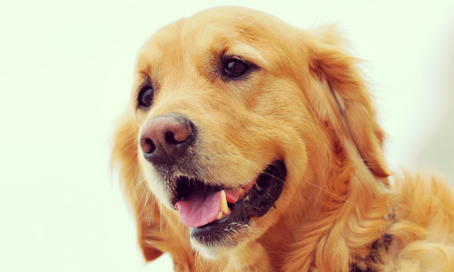 Pour sauver une activité de garde de chiens