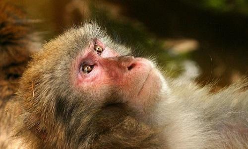 Arrêtez de démolir l'habitat de singes pour l'huile de palme !