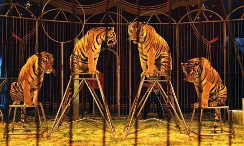 Non aux cirques avec animaux sur Bordeaux Métropole