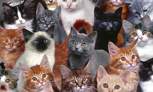 Petition: Against the planned murder of millions of cats in Australia!