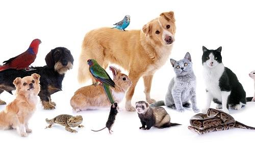 Pétition : Arrêtons de mal parler aux animaux