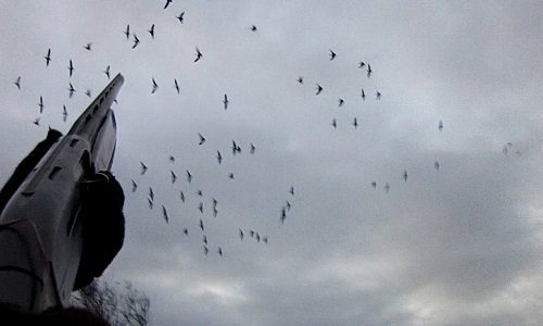 Pétition : Ségolène Royal autorise la chasse aux oies après la date de fermeture officielle