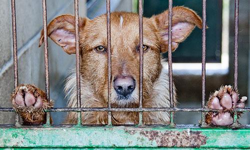 Aidez les animaux dans un état déployable à l'ancien  Leroy Merlin de Douai