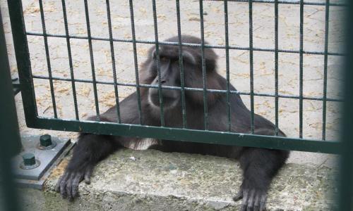 Pétition : Fermeture du zoo de l'orangerie à Strasbourg, vétuste et inadapté