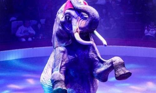 Non au cirque Bouglione avec animaux, non à la souffrance animale