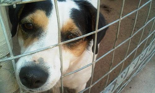 Sauvons les chiens enfermés dans une boîte au Maroc